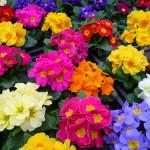 Фото 10: Яркие цвета