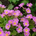 Фото 11: Фиолетовые