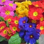 Фото 13: Разноцветные
