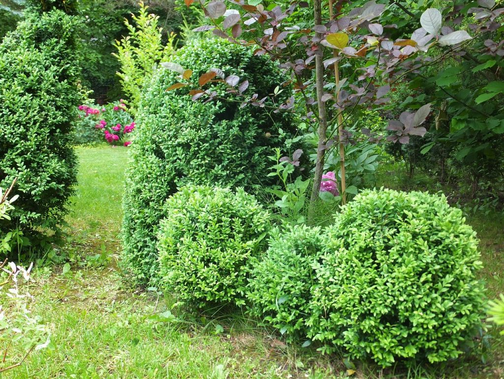 Неприхотливые многолетники для вашего сада