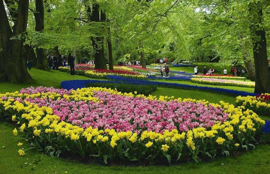 Клумбы с тюльпанами