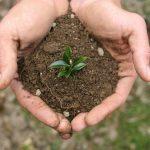 Фото 92: Росток самшита из семение