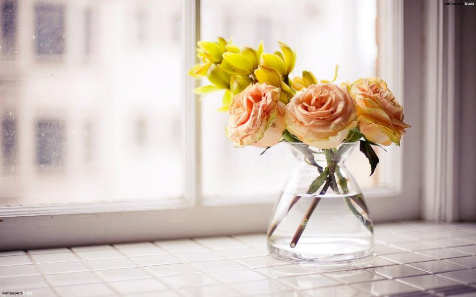 Фото 58: Как сохранить долго розы