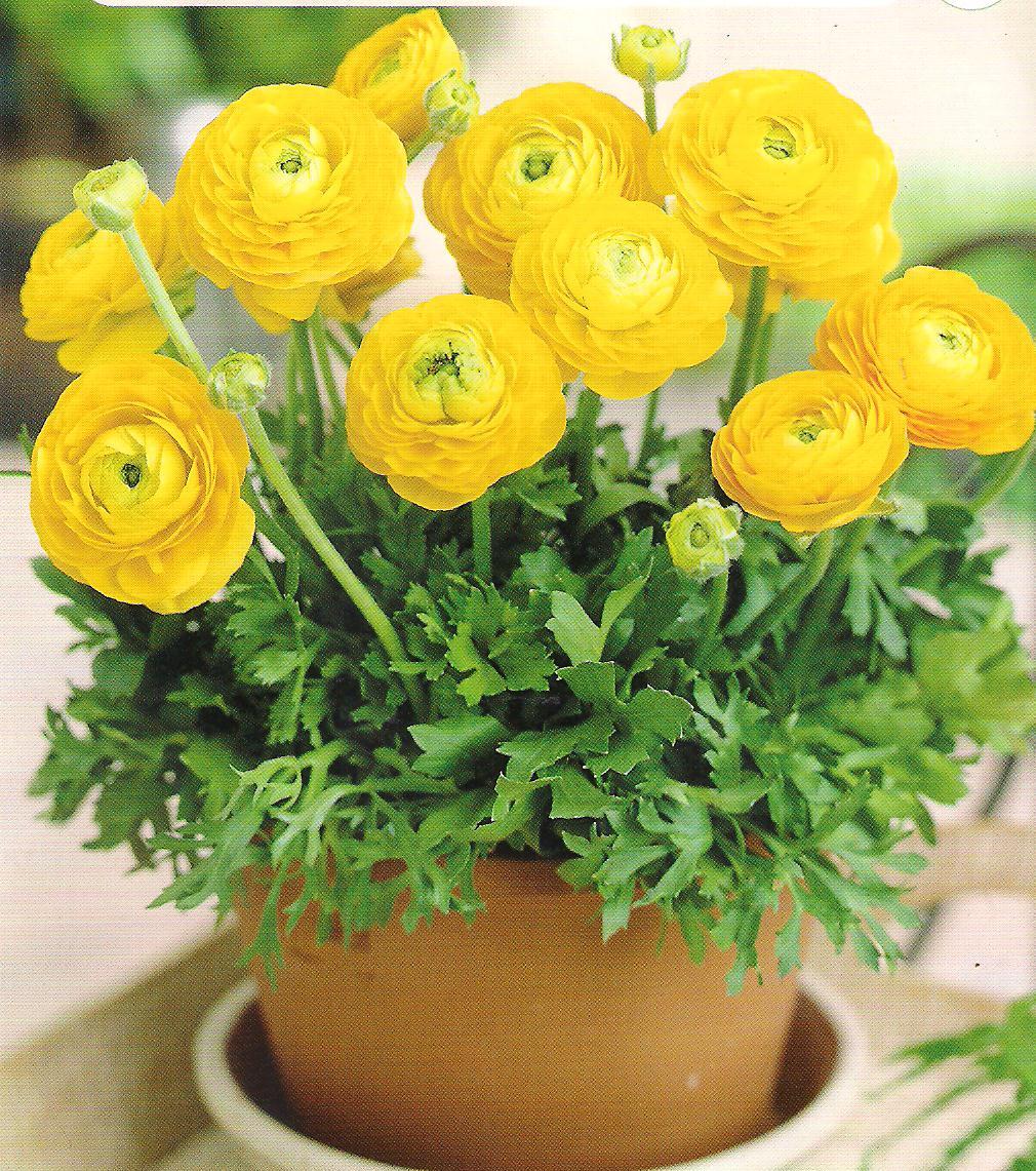 cvetokljutik fot (3)
