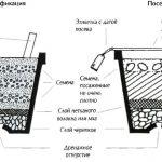 Фото 103: Стратификация и посев семян глицинии