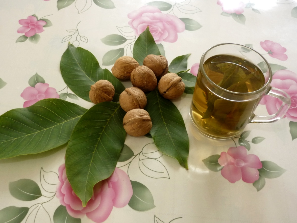 Отвар из листьев грецких орехов