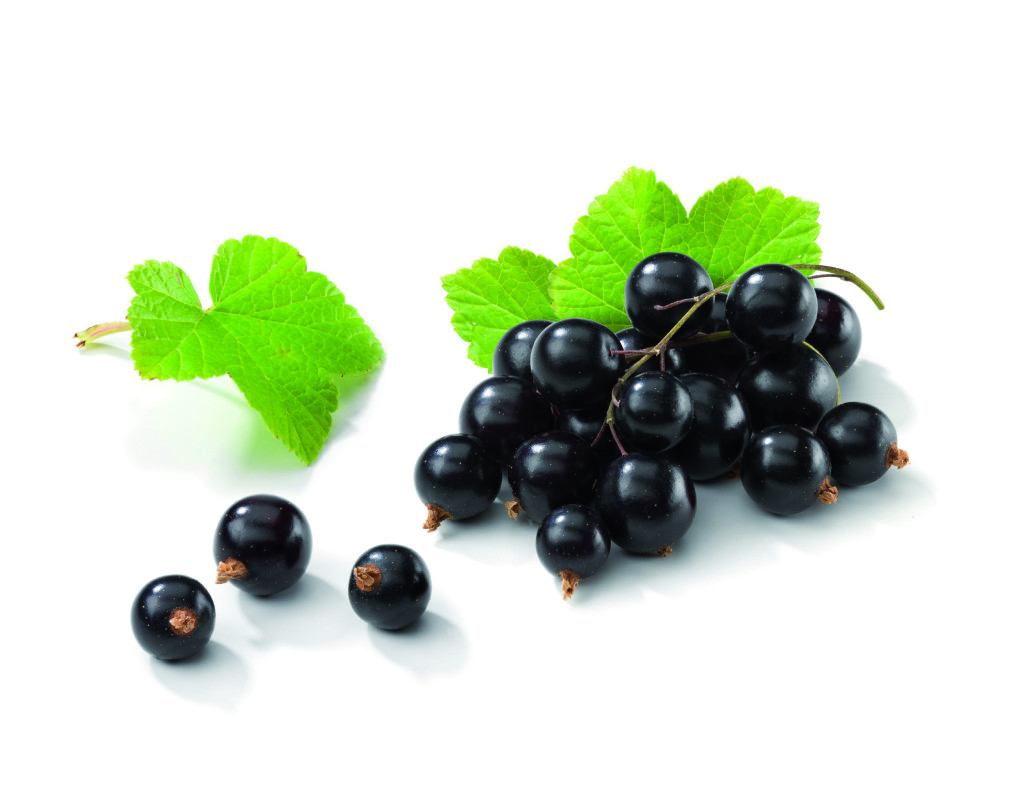 Blackcurrant bunch with Leafs. The file includes a excellent clipping path, so it's easy to work with these professionally retouched high quality image. Thank you for checking it out!