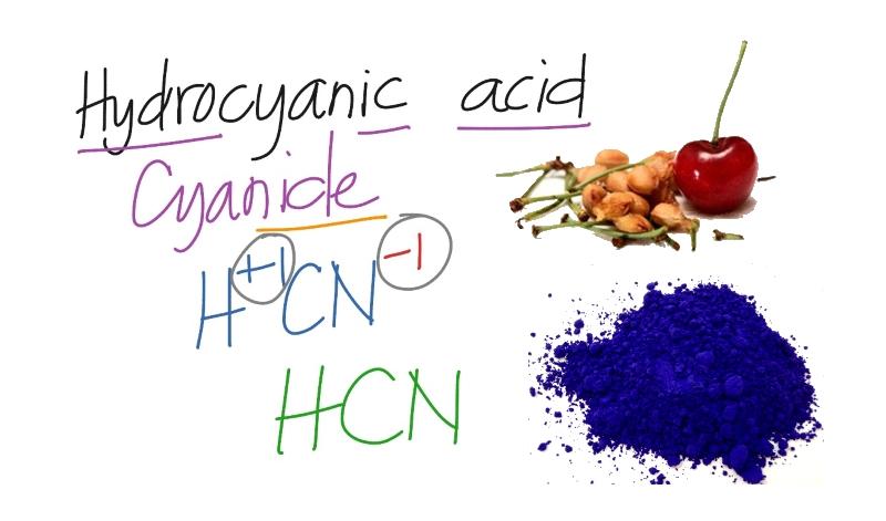 Синильная кислота в косточках вишни