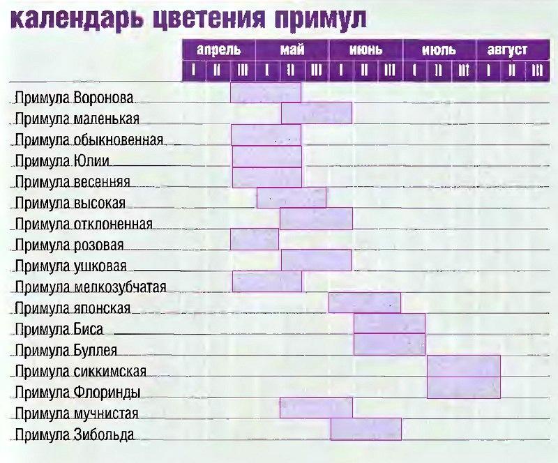 Календарь цветения примул