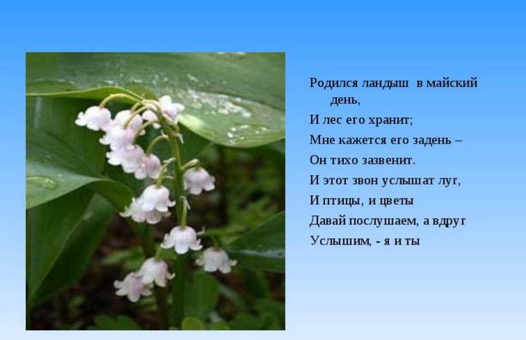 Фото 23: