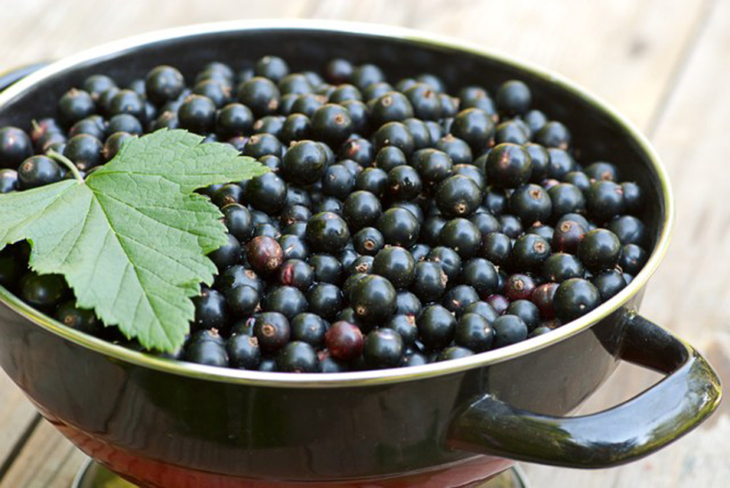 Fresh blackcurrant in bowl on table in summer