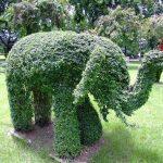 Фото 117: Слон из самшита
