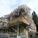 Фото 130: Украшение балкона вистерией
