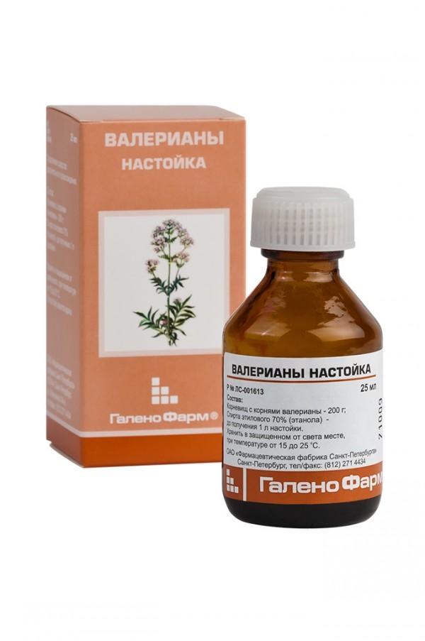 valeriana lechebny (6)
