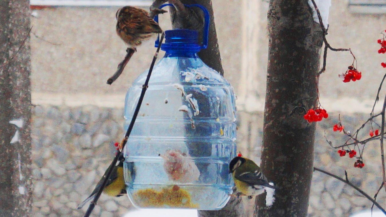Кормушка из пятилитровой бутылки своими руками фото 618