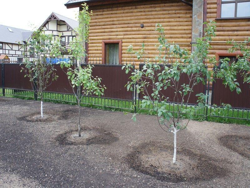 Посадка плодовых деревьев в саду