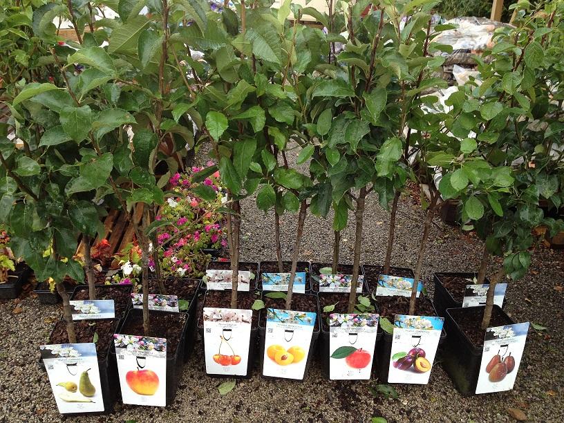 Различные саженцы плодовых деревьев