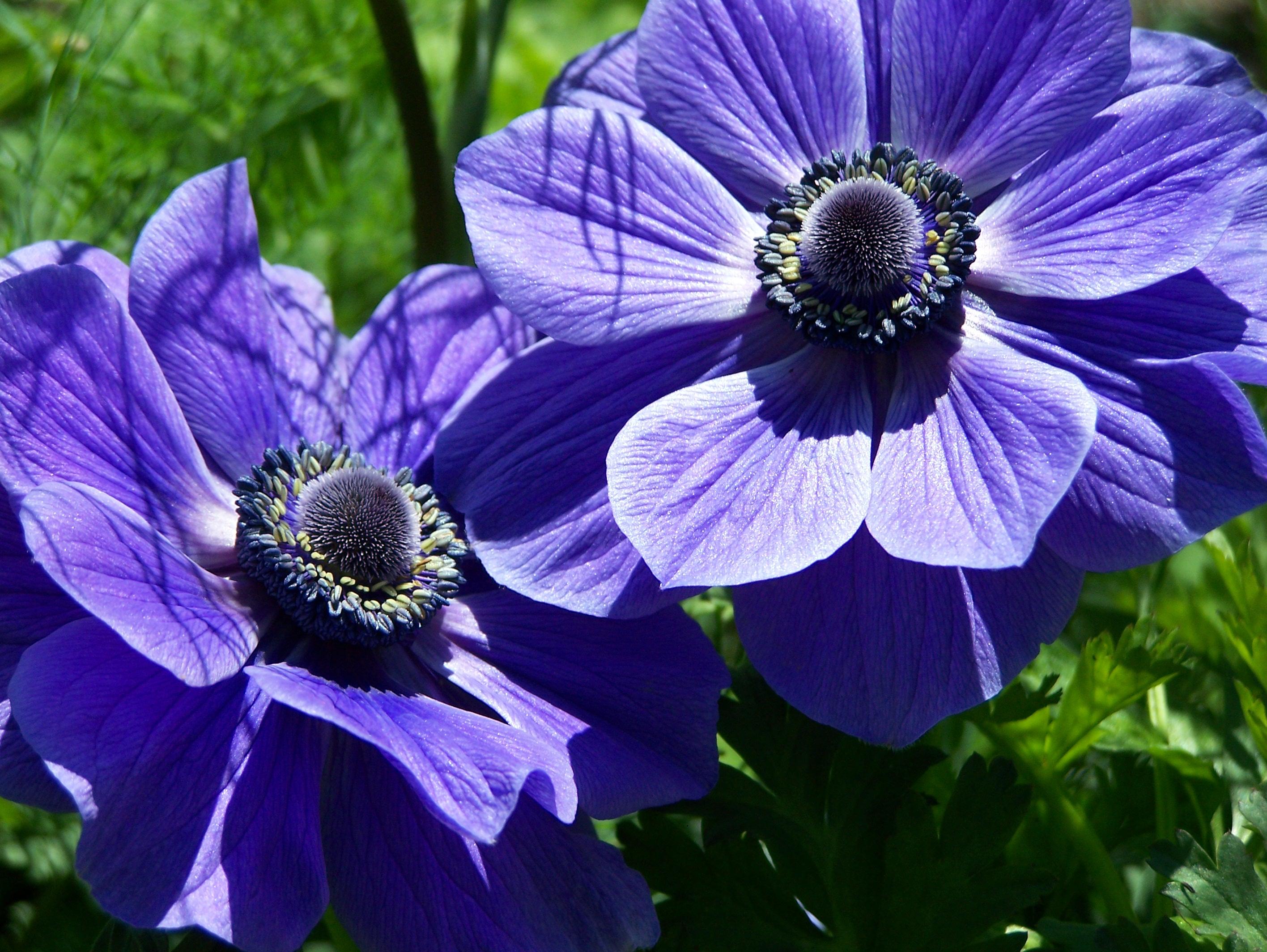 Флер цветов
