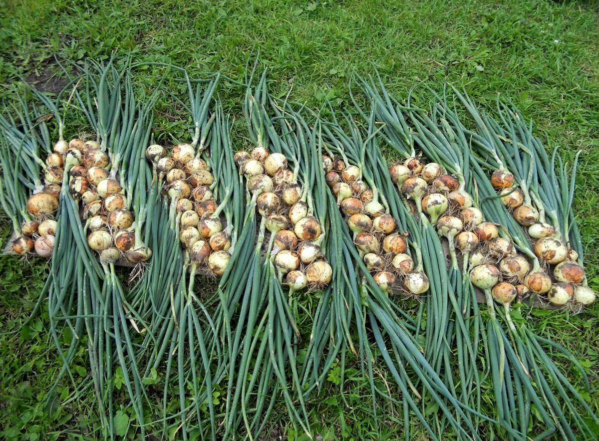 Советы по хранению урожая зимой dfd033 советы по хранению урожая зимой