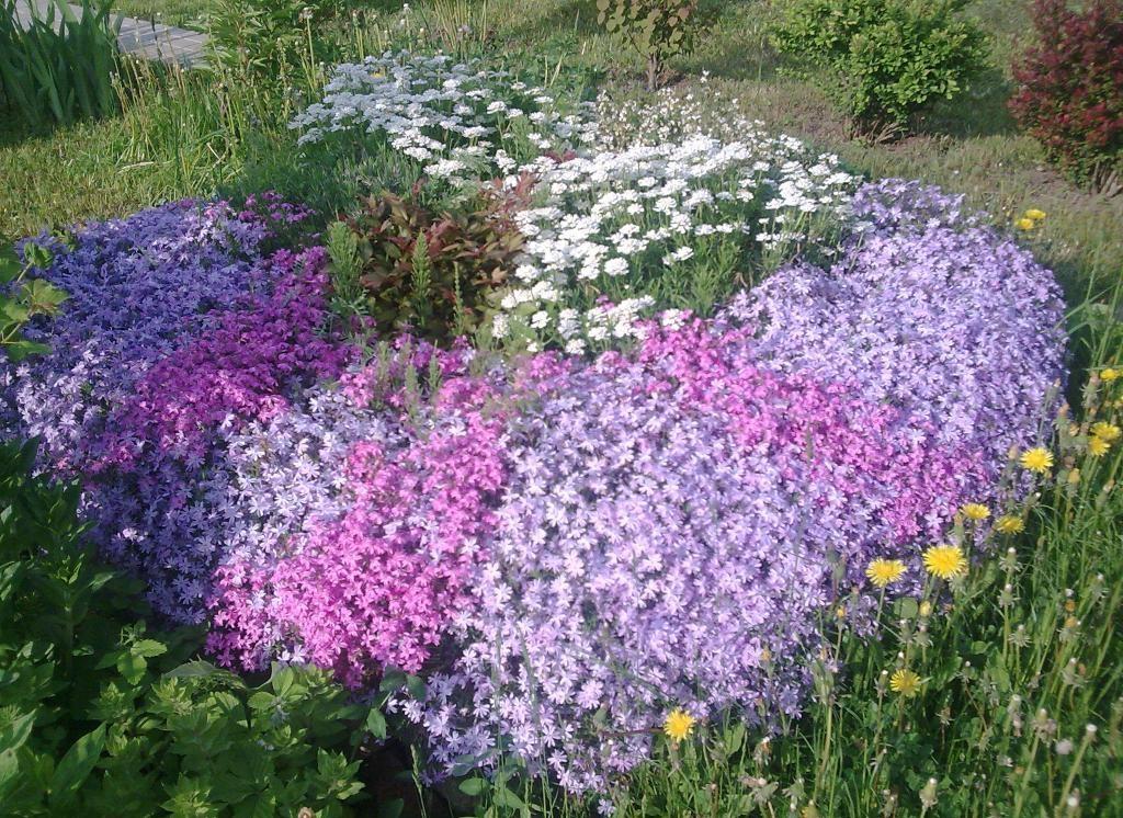 Как сажать почвопокровные цветы 91