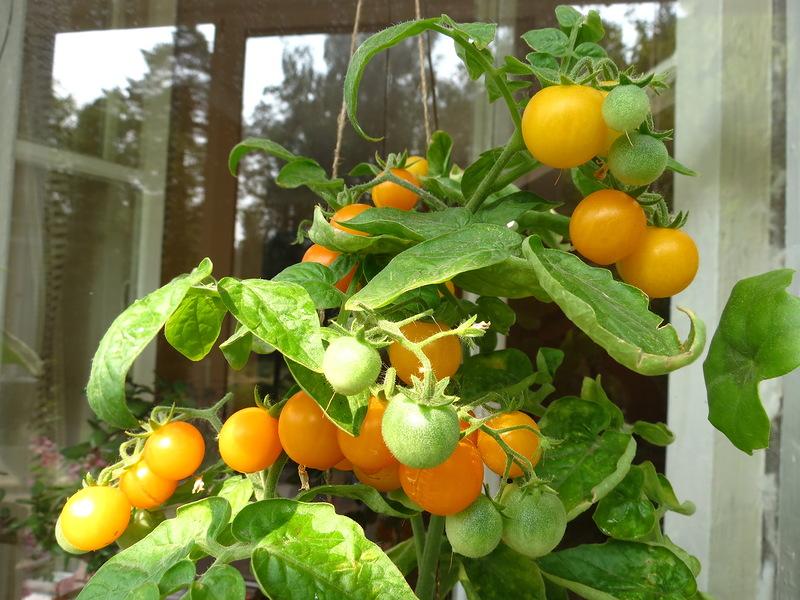 Огород на балконе, выращивание овощей и ягод на лоджии.