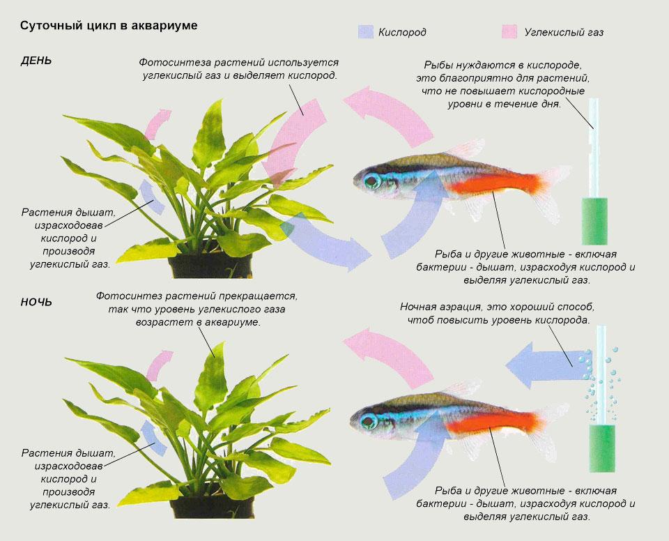 Суточный цикл в аквариуме
