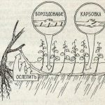 Фото 98: Бороздование и карбовка винограда