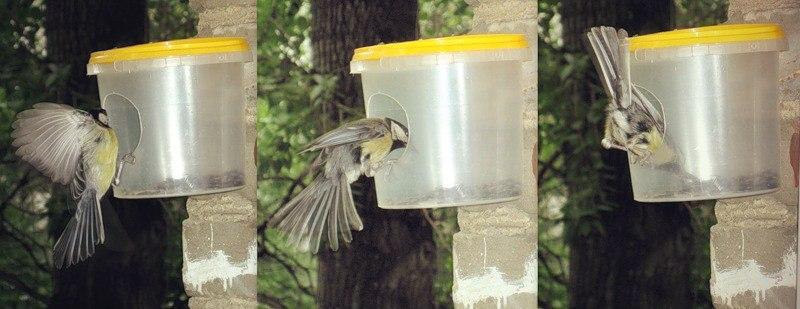 Простая кормушка для мелких птиц