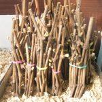 Фото 100: Хранение черенков в опиле