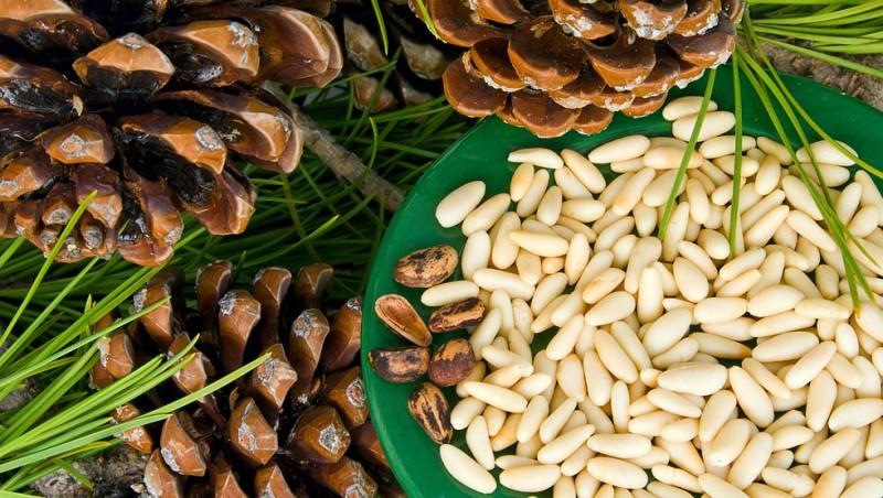 Фото 10: Кедровые орехи очищенные