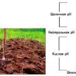Фото 74: Нейтральная кислотность для выращивания винограда