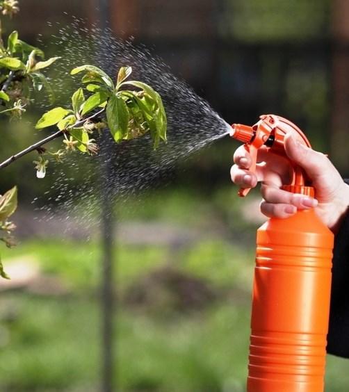 Опрыскивание деревьев в саду