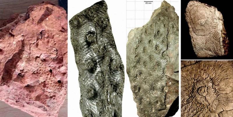 Фото 24: Плауновидные в древних породах