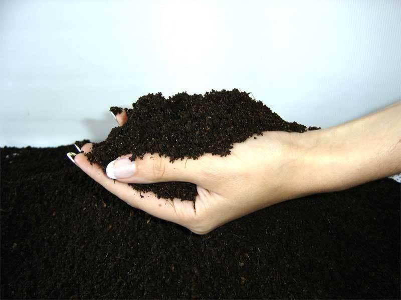 Питательная почва для мальвы