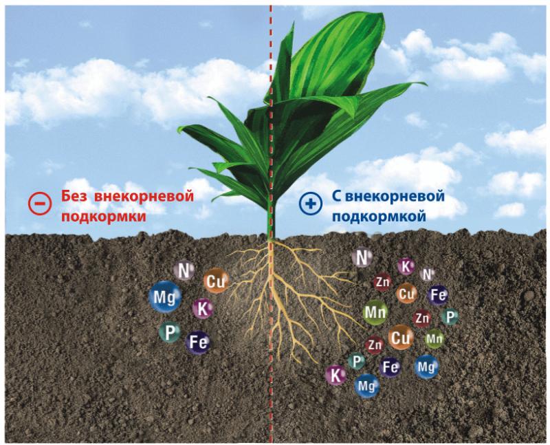Фото 24: Получение микроэлементов растением