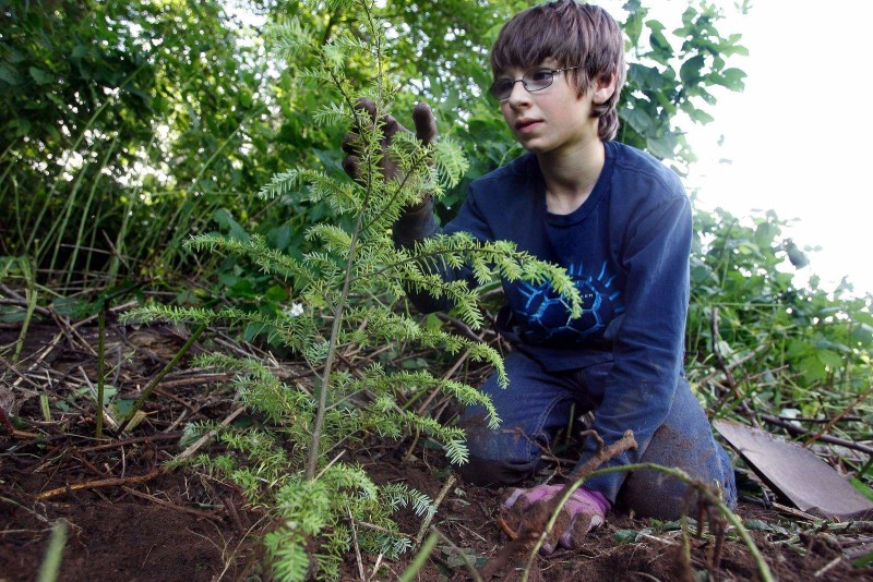 Фото 24: Выращивание кедрового саженца
