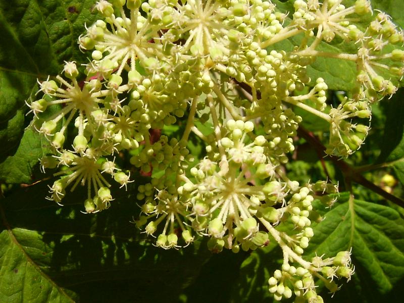 poyavlenie-cvetov