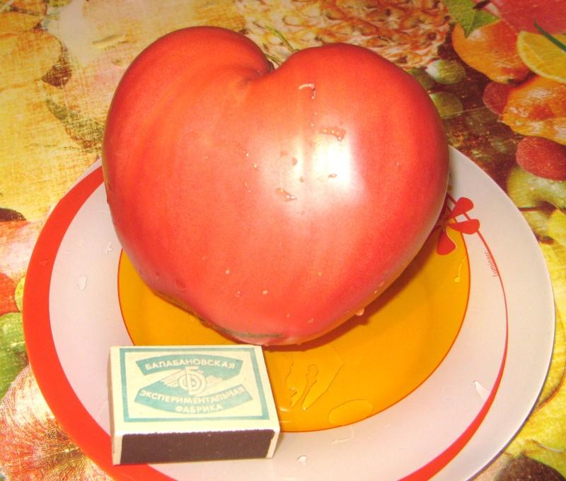 Фото 24: Сорт томата Розовый Спам
