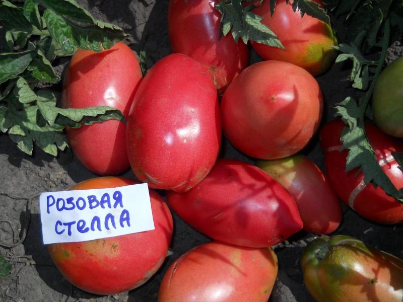 """Фото 25: Сорт томата """"Розовая Стелла"""""""