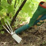 Фото 81: Рахление почвы после высадки винограда
