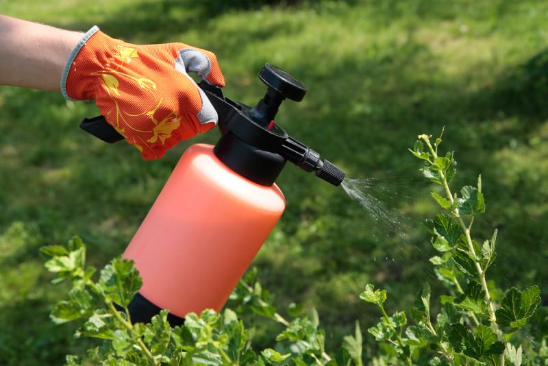 Фото 28: Опрыскивание растений для внекорневой подкормки