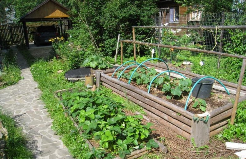 Пример теплой грядки в огороде