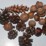Фото 17: Поделки из шишек с орехами