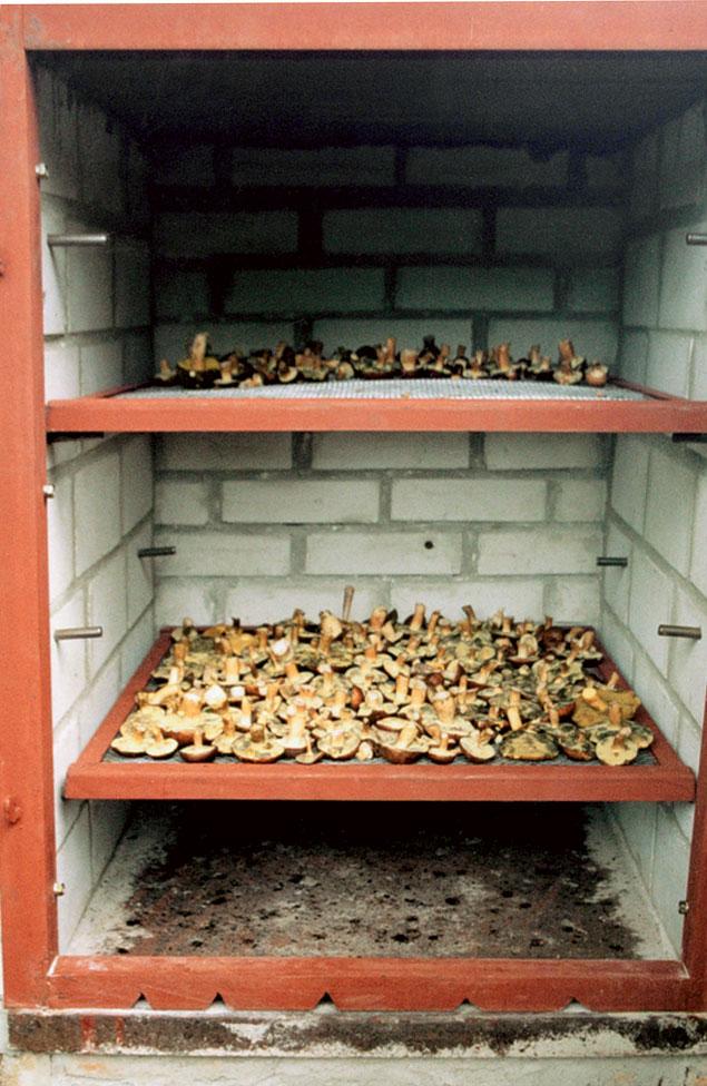 Коптильня для грибов