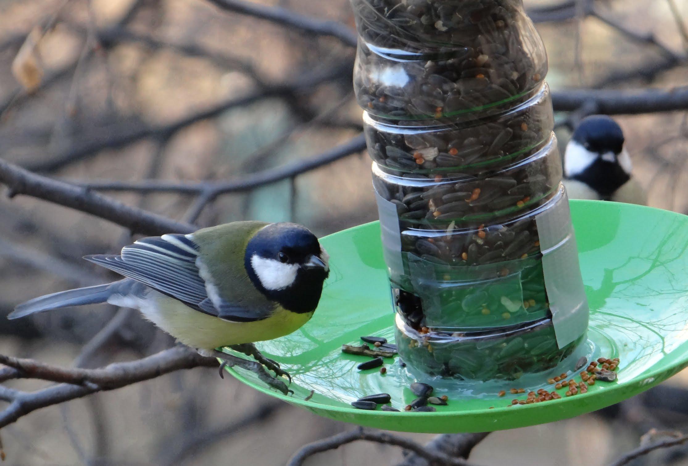 Из бутылки кормушка для птиц
