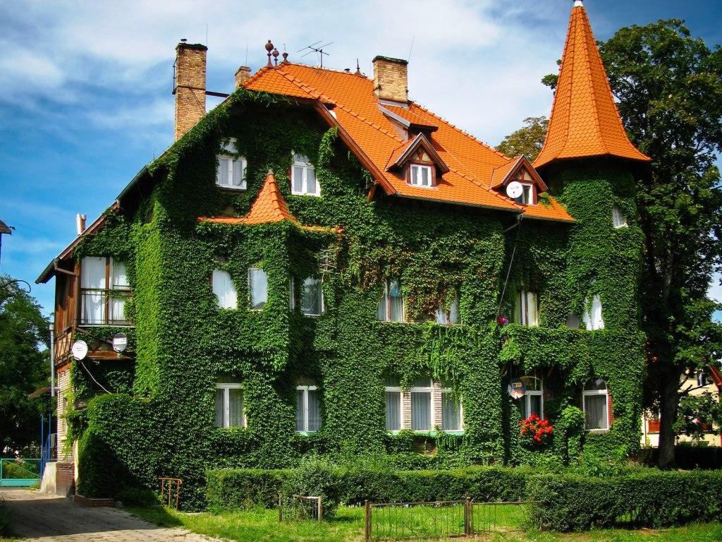 Украшение дома растениями
