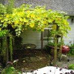 Фото 119: Самодельная пергола под дикий виноград