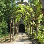 Фото 29: Пергола - туннель деревянная