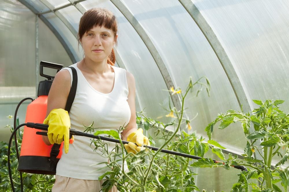 Проведение внекорневых подкормок томатов