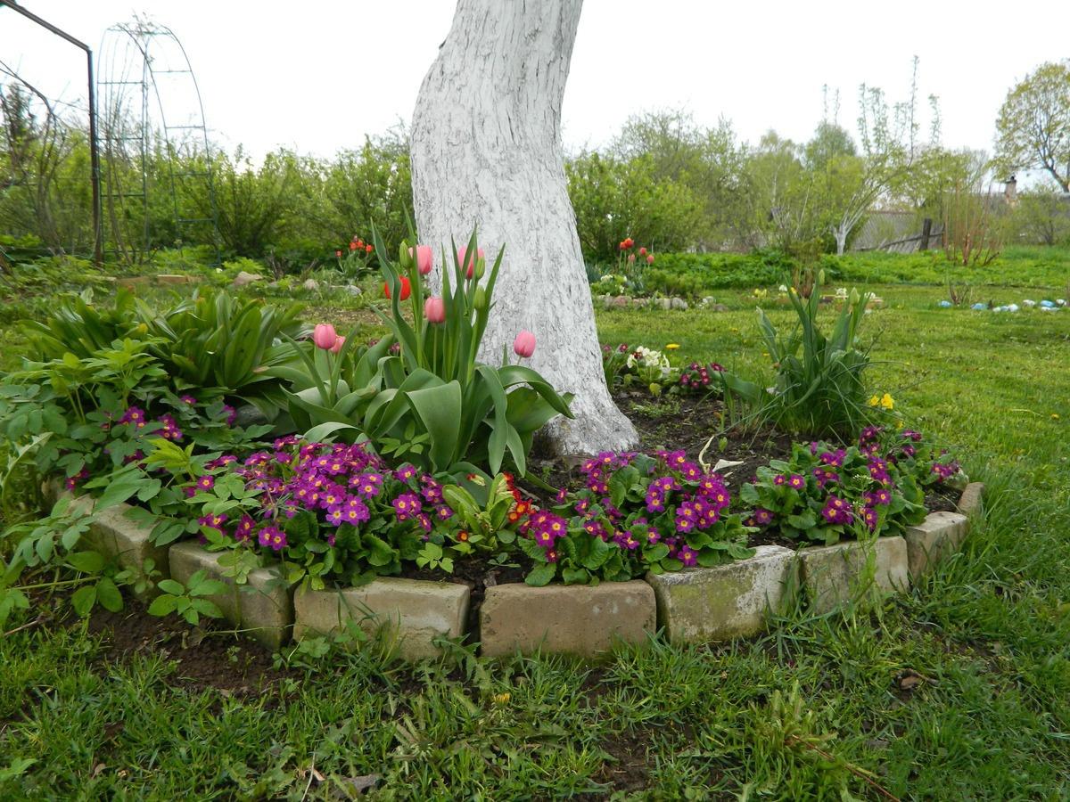 Цветы рядом с яблоней